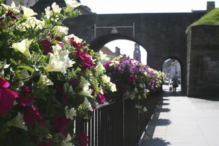 Berwick in bloom